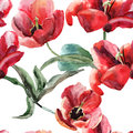 Seamless wallpaper with beautiful tulips flowers watercolor painting Royalty Free Stock Images