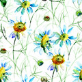 Seamless wallpaper with camomile flowers watercolor illustration Stock Photography