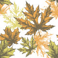 Seamless wallpaper with a maple leaf, hand-drawing Royalty Free Stock Photos