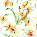 Seamless wallpaper with narcissus flowers watercolor illustration Stock Images
