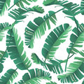 Seamless watercolor illustration of tropical leaves, jungle.