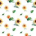 Seamless watercolor pattern on white background. Sunflowers, leaves and wild herbs