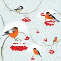 Seamless winter background with bullfinch tomtit and bunch of rowan Stock Photos