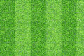 Seamlessly green grasses texture background.