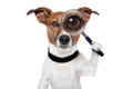 Searching dog with magnifying glass Royalty Free Stock Photo