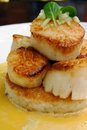 Seared scallops 2 Stock Photography