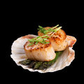 Seared scallops over black studio closeup of garnished with pea shoots and served on a bed of asparagus presented on a scallop Stock Photos
