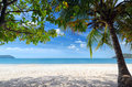 Seascape green tree on a white sand beach Stock Images