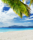 Seascape green tree on white sand beach malcapuya island palawan philippines Royalty Free Stock Image
