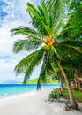 Seascape green tree on white sand beach malcapuya island palawan philippines Stock Photo
