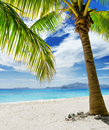 Seascape green tree on white sand beach malcapuya island palawan philippines Royalty Free Stock Photography