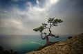 Seascape trees stand on a cliff above the sea Royalty Free Stock Photo