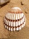Seashell на п яже Стоковое фото RF
