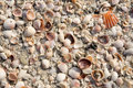 Seashell Background Stock Image