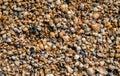 Seashell Background, Small Sea...