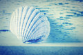 Seashell background a white and blue tone Royalty Free Stock Photography