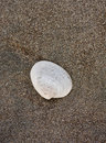 Seashell on the beach Royalty Free Stock Images