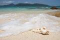 Seashell on a beach Royalty Free Stock Photo