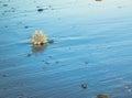 Seashell Beach Royalty Free Stock Photo