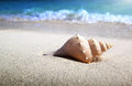 Seashell on the beach shallow dof Royalty Free Stock Photo