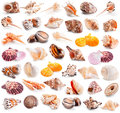 Seashell collection isolated on a white Royalty Free Stock Photo