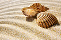 Seashell and conch a sea shell a laying in the golden sand of a beach Stock Images