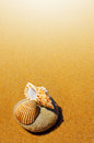 Seashell and conch a sea shell a laying in the golden sand of a beach Stock Photos