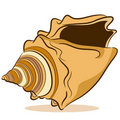 Seashell Drawing Royalty Free Stock Photos