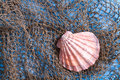 Seashell on fishing net Royalty Free Stock Photo