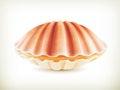 Seashell, High Quality Illustr...