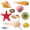Seashell icons bright highly detailed Stock Image