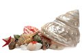 Seashell isolated on white background Royalty Free Stock Photo