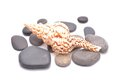 Seashell over group of stones on white background Royalty Free Stock Photo