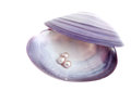 Seashell with pearls Royalty Free Stock Image