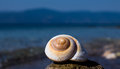 Seashell recollection of the lovely summer by the sea just relax Stock Image