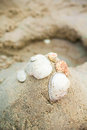 Seashell on sand beach summer time Stock Image