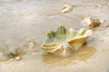 Seashell on sand at beach togean islands or togian islands in the gulf of tomini central sulawesi indonesia Stock Image
