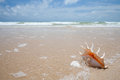 Seashell on the sand of seashore Stock Images