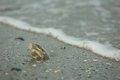 Seashell in the sand stuck near water Royalty Free Stock Photo