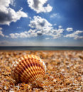 Seashell on sand at sunny summer day Stock Photography