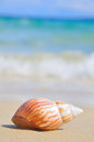 Seashell on the sea shore shell in shallow sandy beach waters waves rolling in distance shallow depth of field Stock Photo