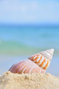 Seashell on the sea shore shell in shallow sandy beach waters waves rolling in distance shallow depth of field Royalty Free Stock Image