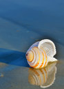 Seashell on the seashore Royalty Free Stock Photo