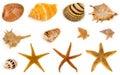 Seashell and starfish Royalty Free Stock Photo