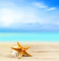 Seashell and starfish on the sandy beach Royalty Free Stock Photo