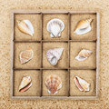 Seashell in a wooden box with sand different Stock Photography