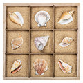 Seashell in a wooden box with sand different Stock Photo