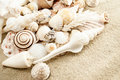 Seashells. Royalty Free Stock Photos