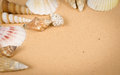 Seashells Stock Photography