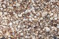 stock image of  Seashells as background, sea shells collection